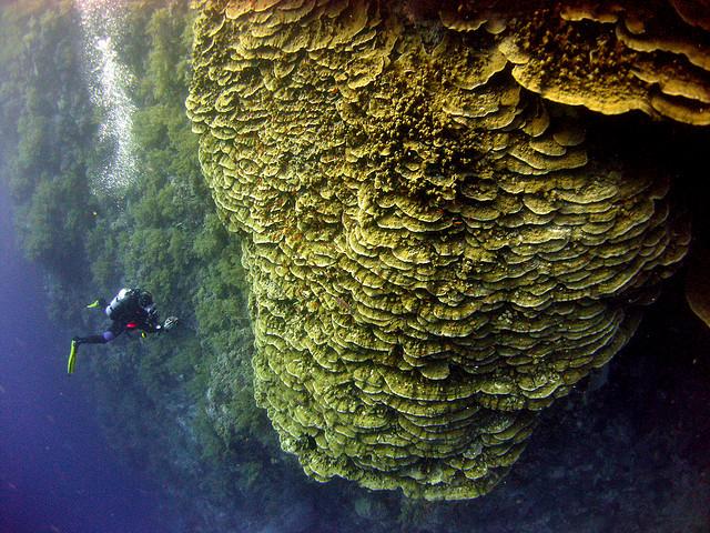 Рифовая-стена-Дедалус-риф